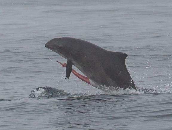 пенис кита фото